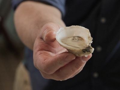 Photo of a hand holding a Moondancer oyster from Mook Sea Farm in Maine.