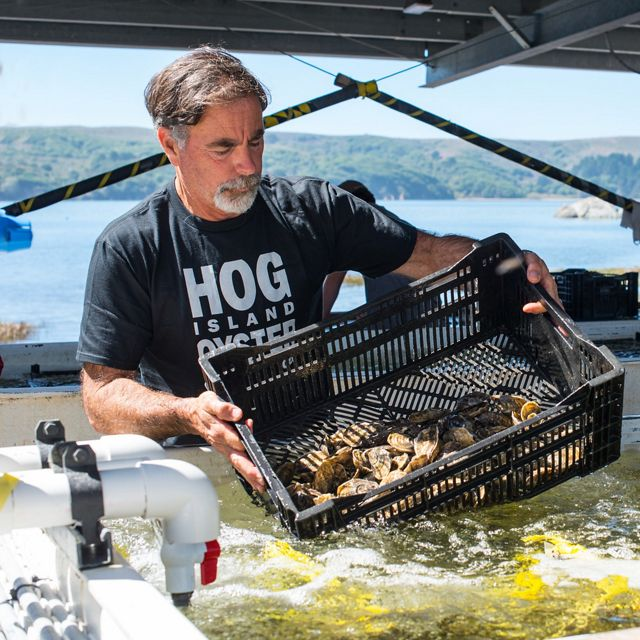 Photo of man on boat handling oysters.