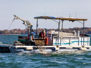 """New Hampshire oyster growers placing """"uglies"""" in the water at an oyster reef restoration site"""