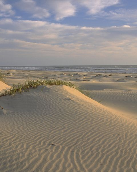 Coastal dunes on South Padre Island in Texas.
