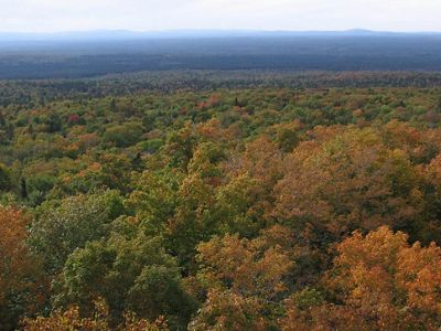 View of autumn trees in the St. John forest