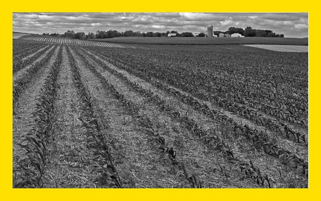 Black and white photo of a farm field.