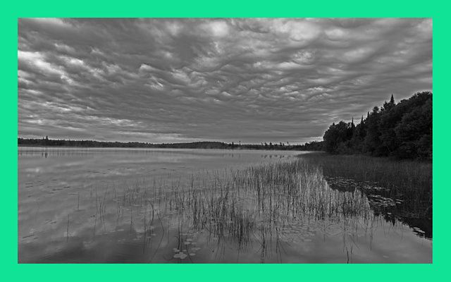 Black and white photo of a wooded shoreline.