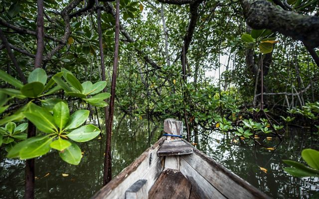 This intricate mangrove ecosystem located in a tidal inlet on the Kenya coast includes nine different mangrove species.