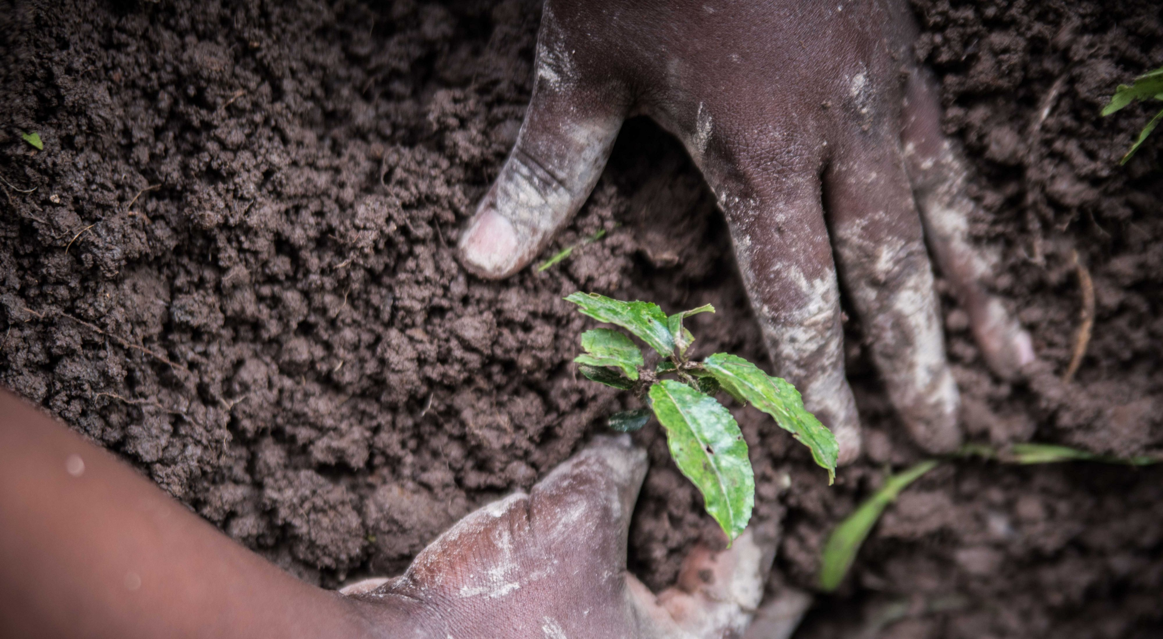 TNC Kenya's team planted 2,000 seedlings at a secondary school and three neighboring farms in Kenya.