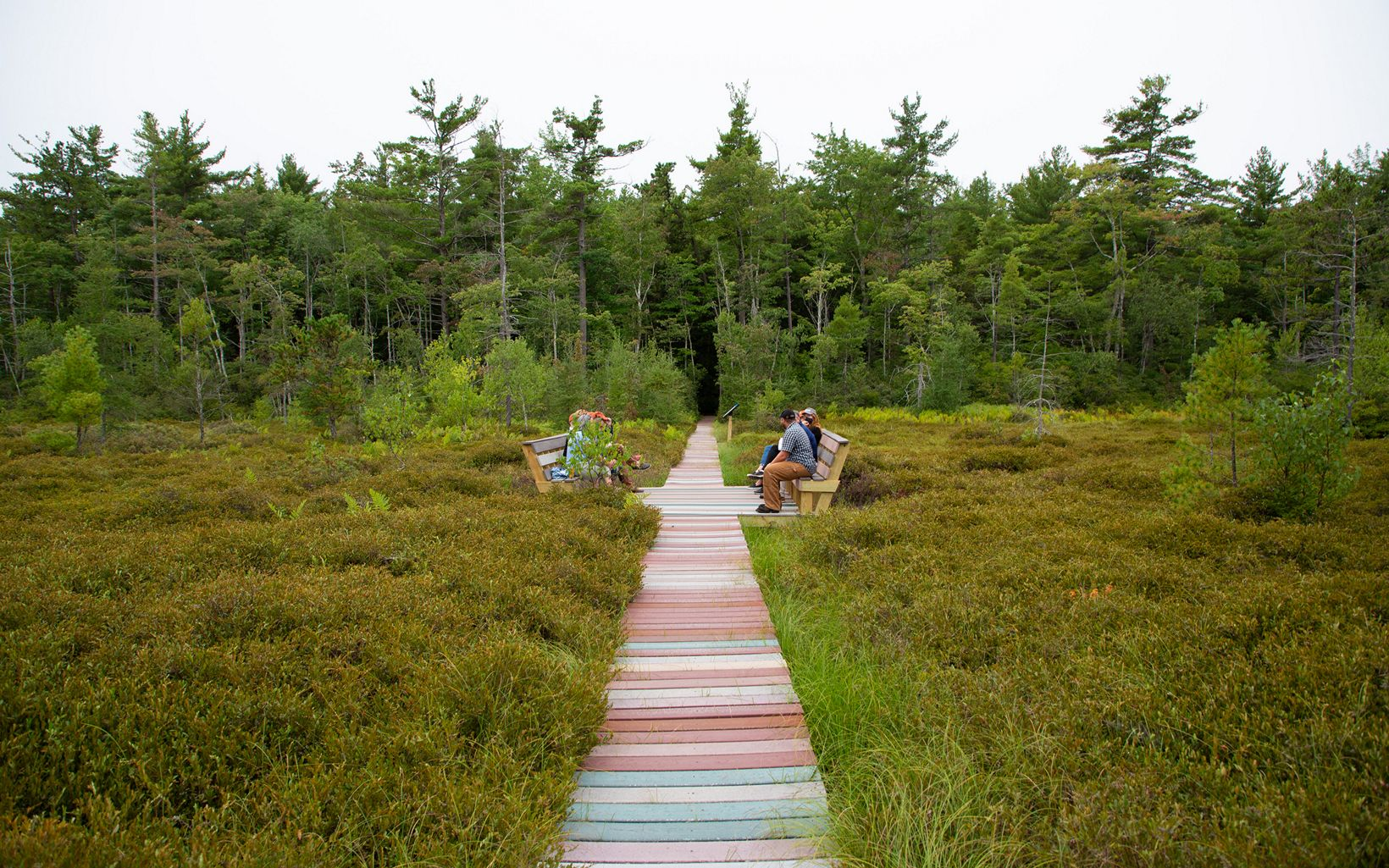 People sit on benches on each side of a boardwalk over green vegetation.