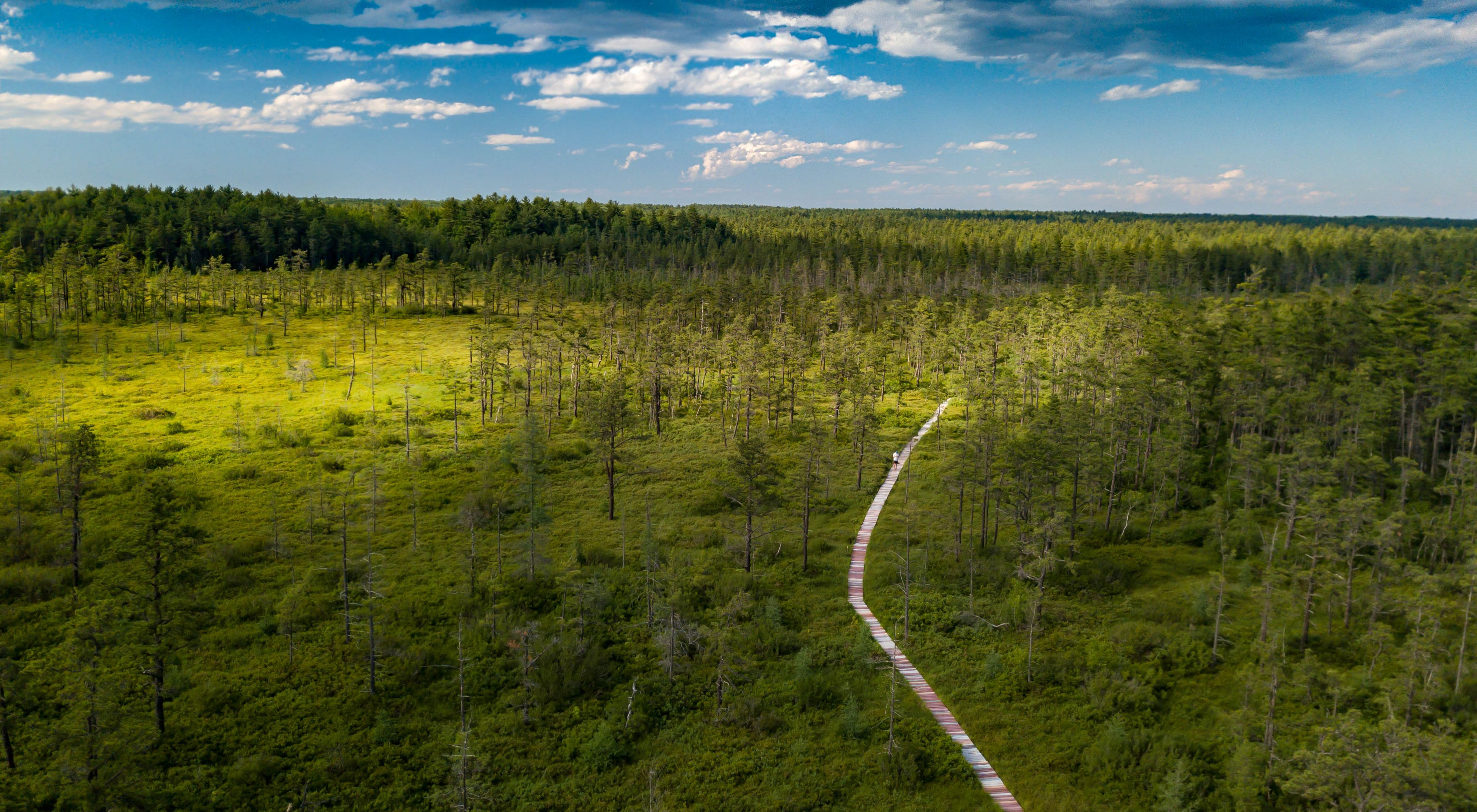 Aerial view of a long wooden boardwalk extending through forests and scrubby heath.