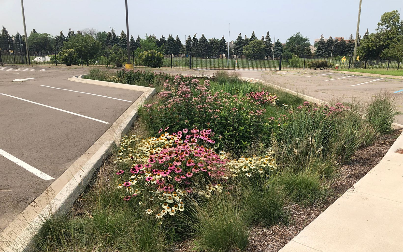 Flowers are blooming in Sacred Heart Church's green stormwater infrastructure.