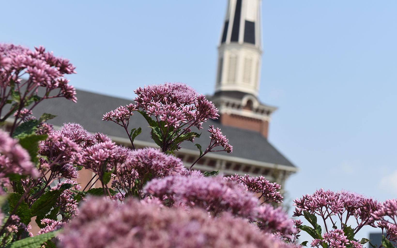 Flowers are blooming in foreground. Sacred Heart Church in the backround.