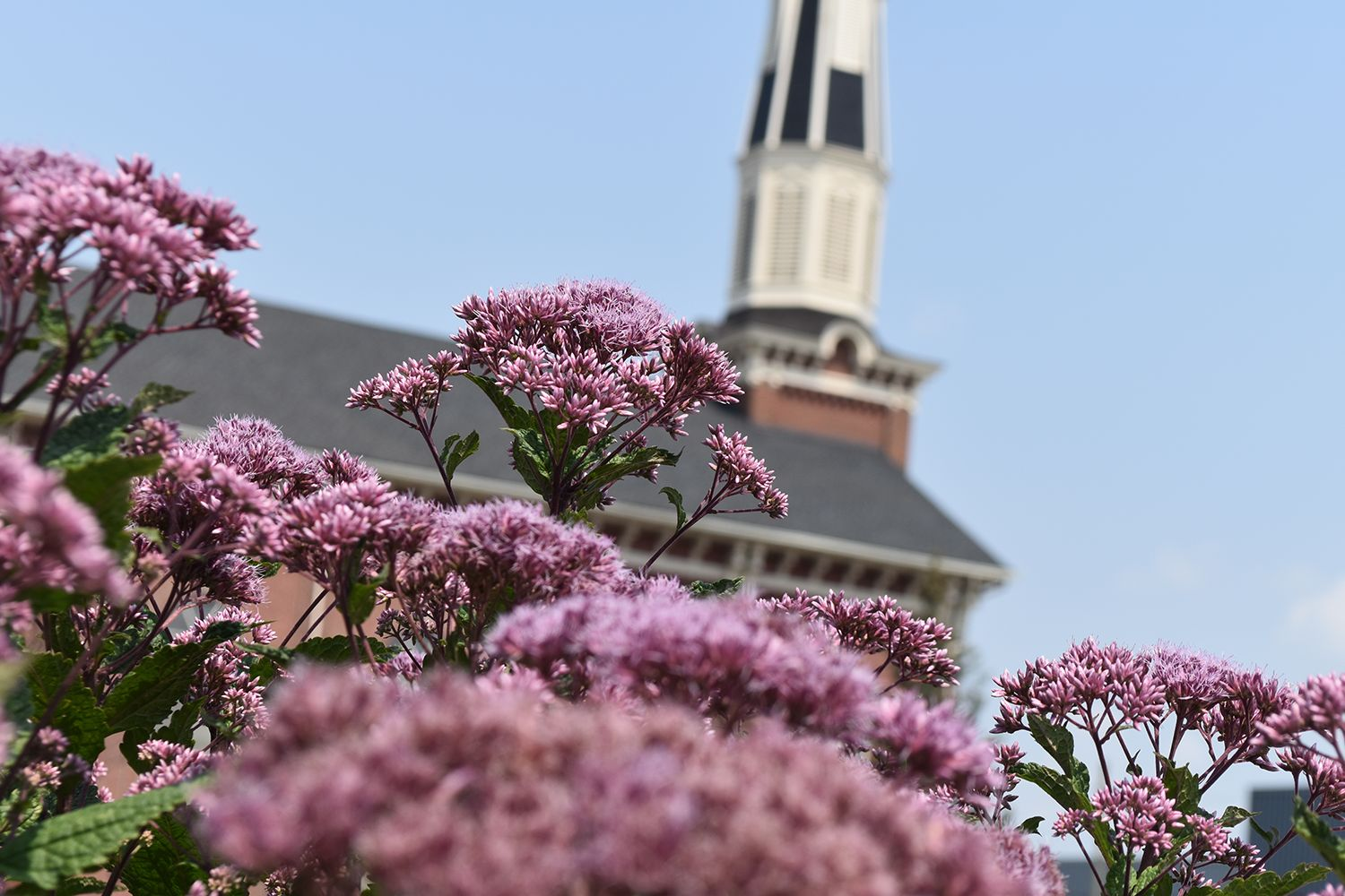 Brightly colored flowers with church building in the background.
