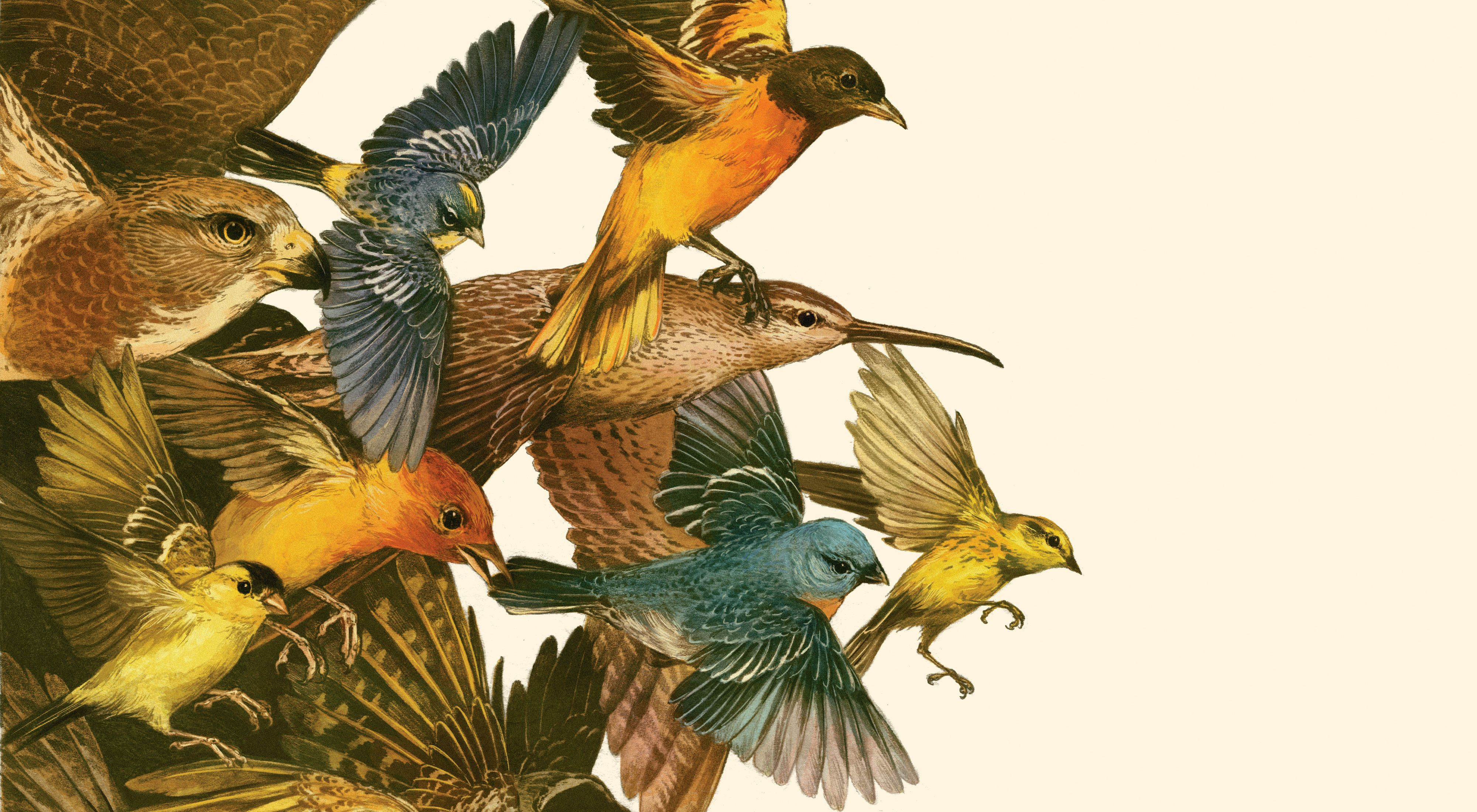 a colorful illustration of multiple species of birds