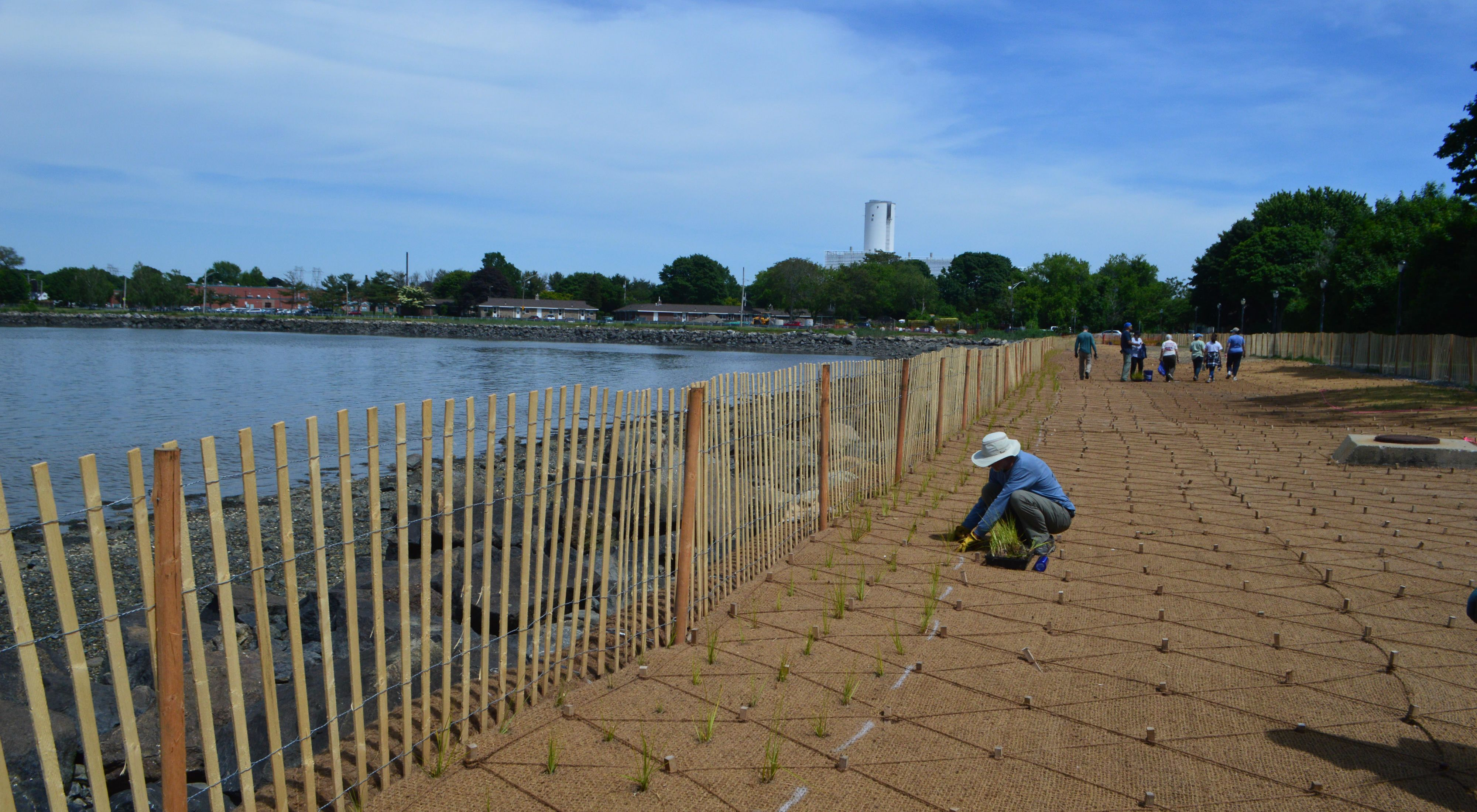TNC, local organizations and volunteers plant marsh grass plugs to restore a salt marsh along Salem's Collins Cove to naturally address flooding and erosion.