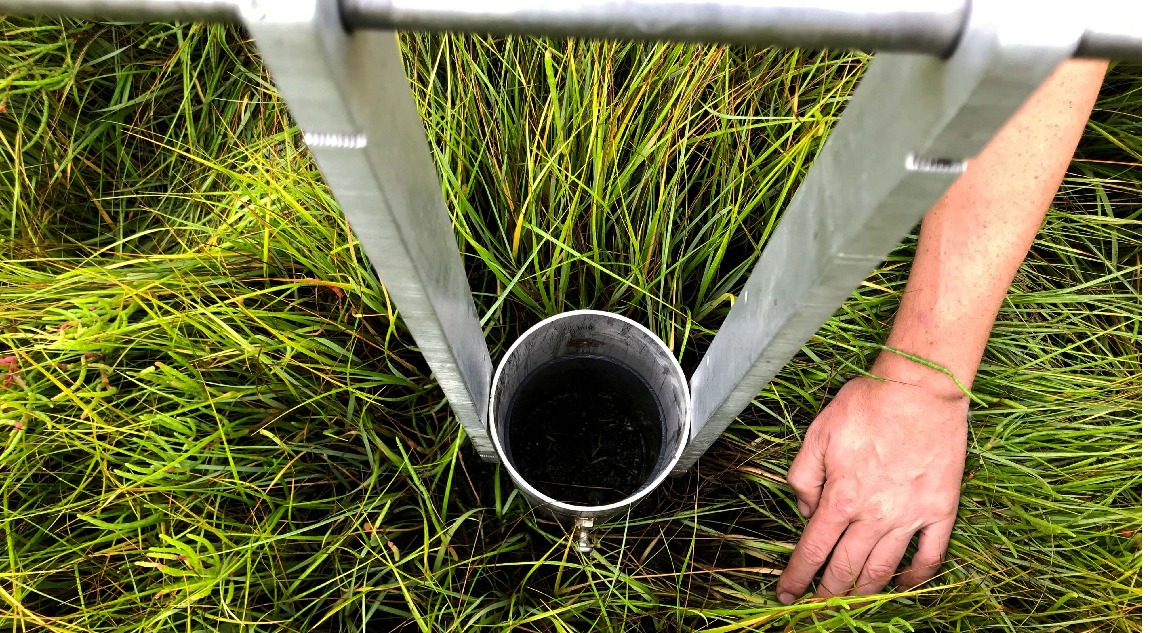 scientists and partners are using an unlikely tool to restore the health of Long Island salt marshes. Here, taking a core to study via CT scan.