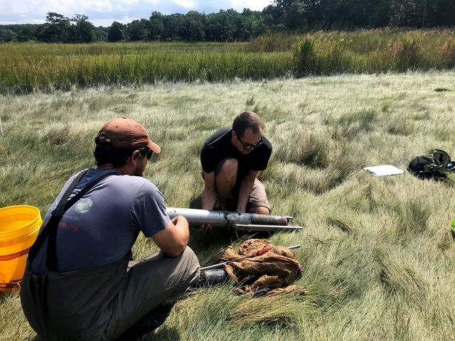 Two researchers crouch in marsh grass preparing a cylindrical metal corer.