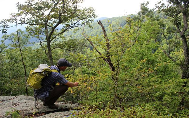 A man wearing a yellow backpack crouches to get closer to a low plant to examine the leaves. A forested ridge rises across a valley in front of him.