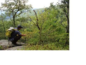 TNC Land Steward Sam Truslow hikes Virginia's Fortune's Cove Preserve.