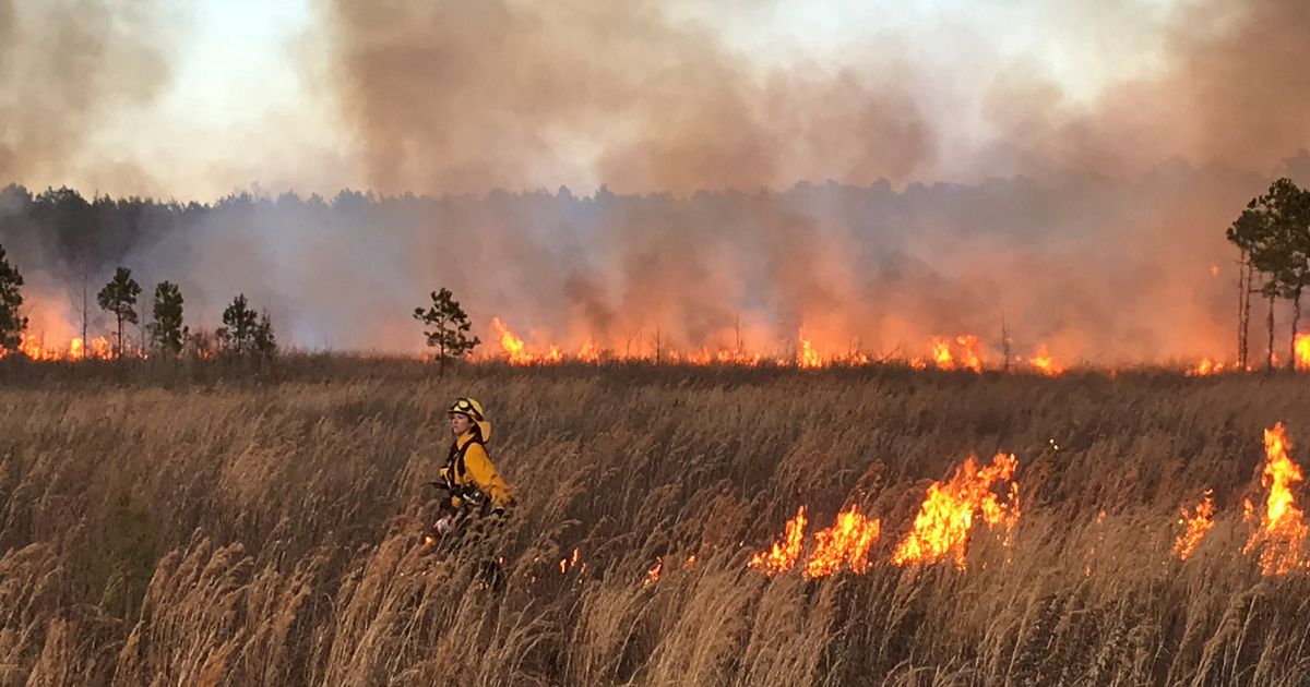 During a controlled burn at South Quay Sandhills Natural Area Preserve, March, 2018.