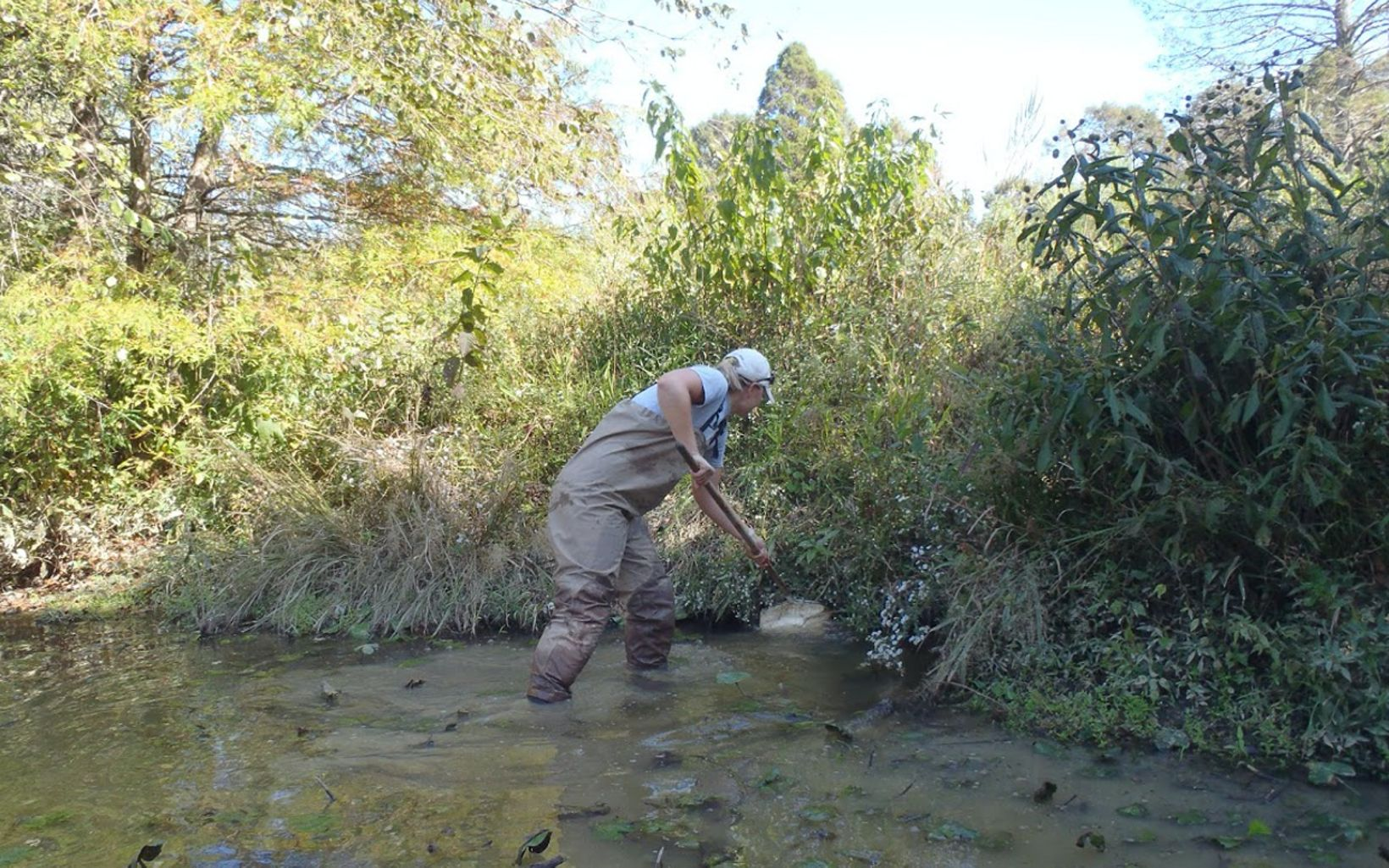 A researcher places a net into a swampy area in a creek.