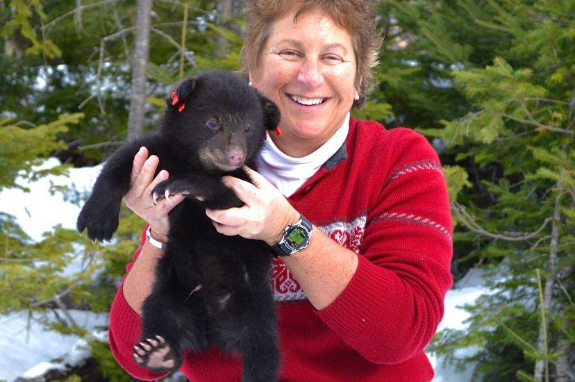 Sandy Ritchie, bióloga, sostiene en sus manos a un oso cachorro durante una visita al Programa para el Estudio de Osos del Departamento de Pesquerías Interiores y Vida Silvestre de Maine.