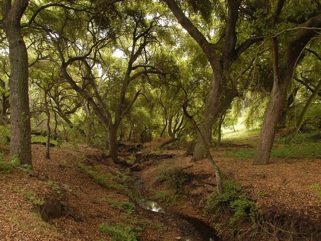 Forest floor view of a creek flowing through oak woodlands in the Santa Rosa Plateau Ecological Reserve,
