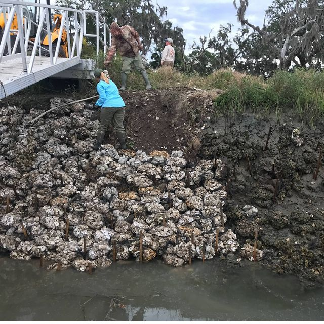 A living shoreline project in progress on Sapelo Island, GA.