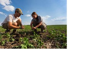 Two people leaning over cover crops