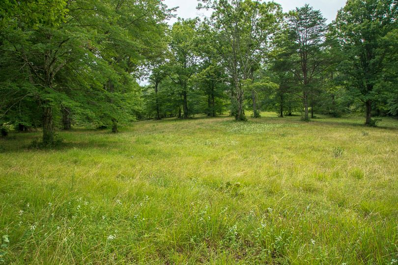 A grassy meadow creates a break in a forest.