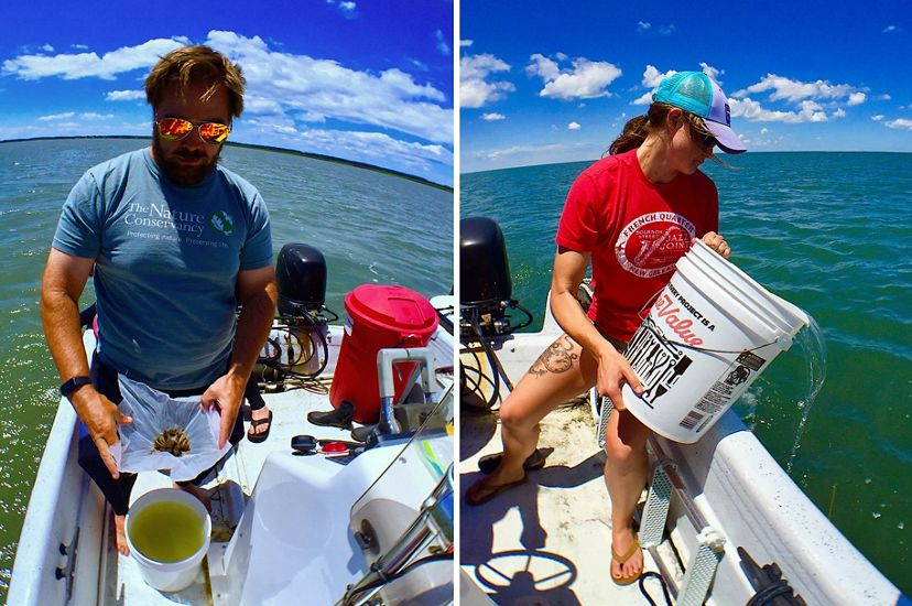 Two photos combined to create a single image showing a man and a woman standing on opposite sides of small a boat, each holding 10 gallon buckets full of baby scallops ready for planting.