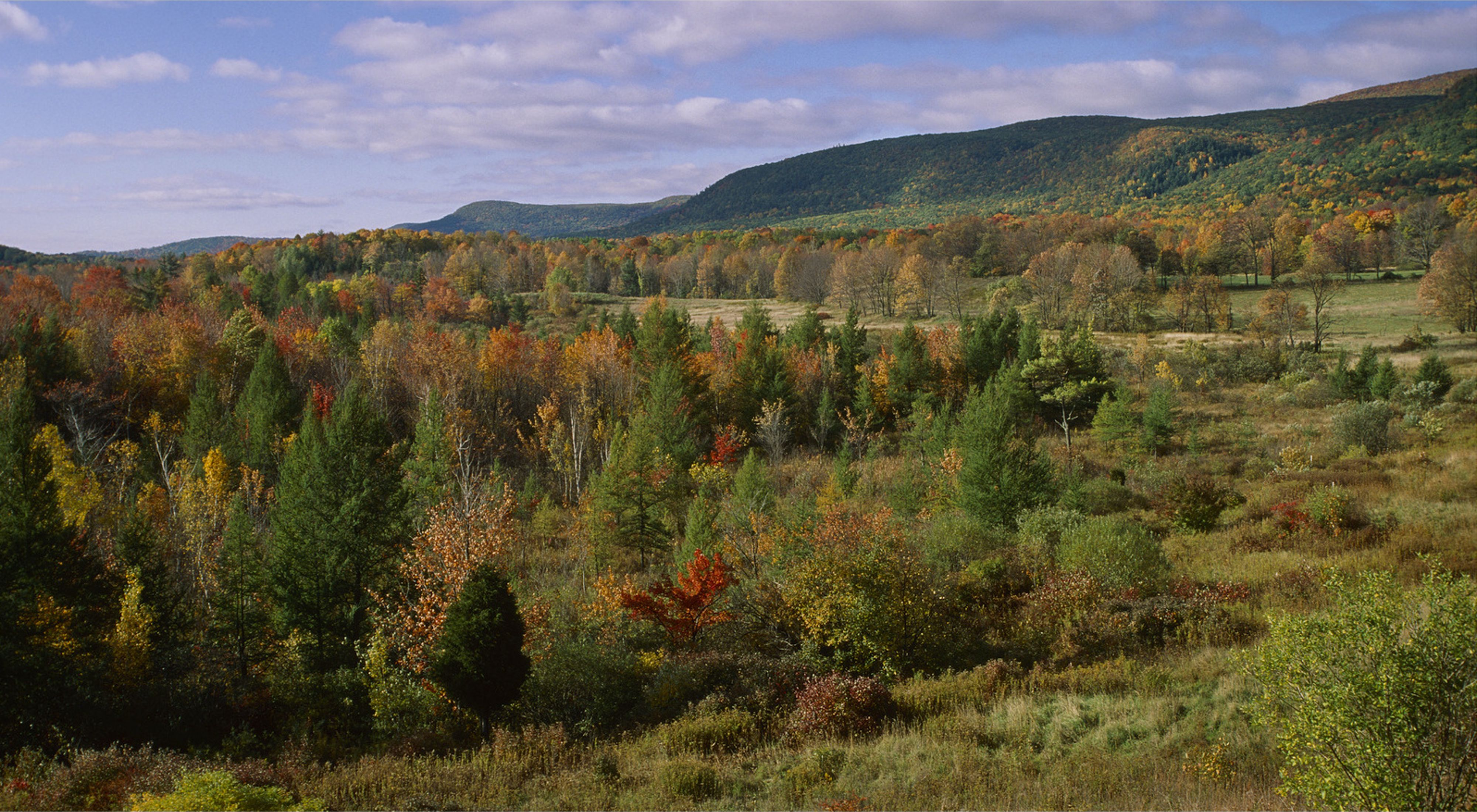 Rolling hills covered in green, yellow and orange-leaved trees with mountains in the background.
