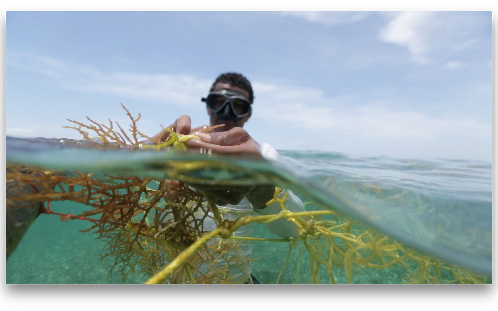 Belize Seaweed Aquaculture