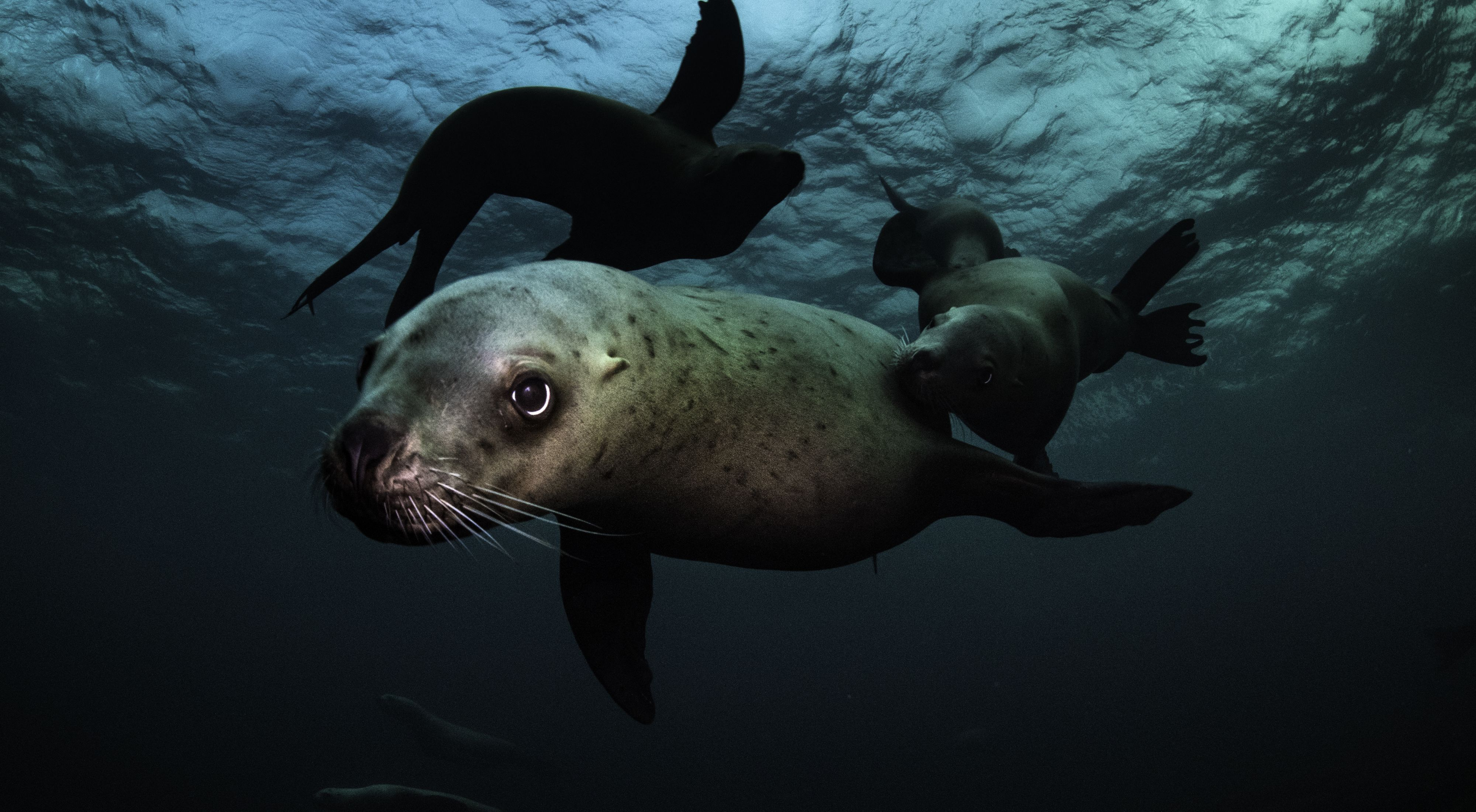 Face-to-face with sea lions in the Great Bear Sea