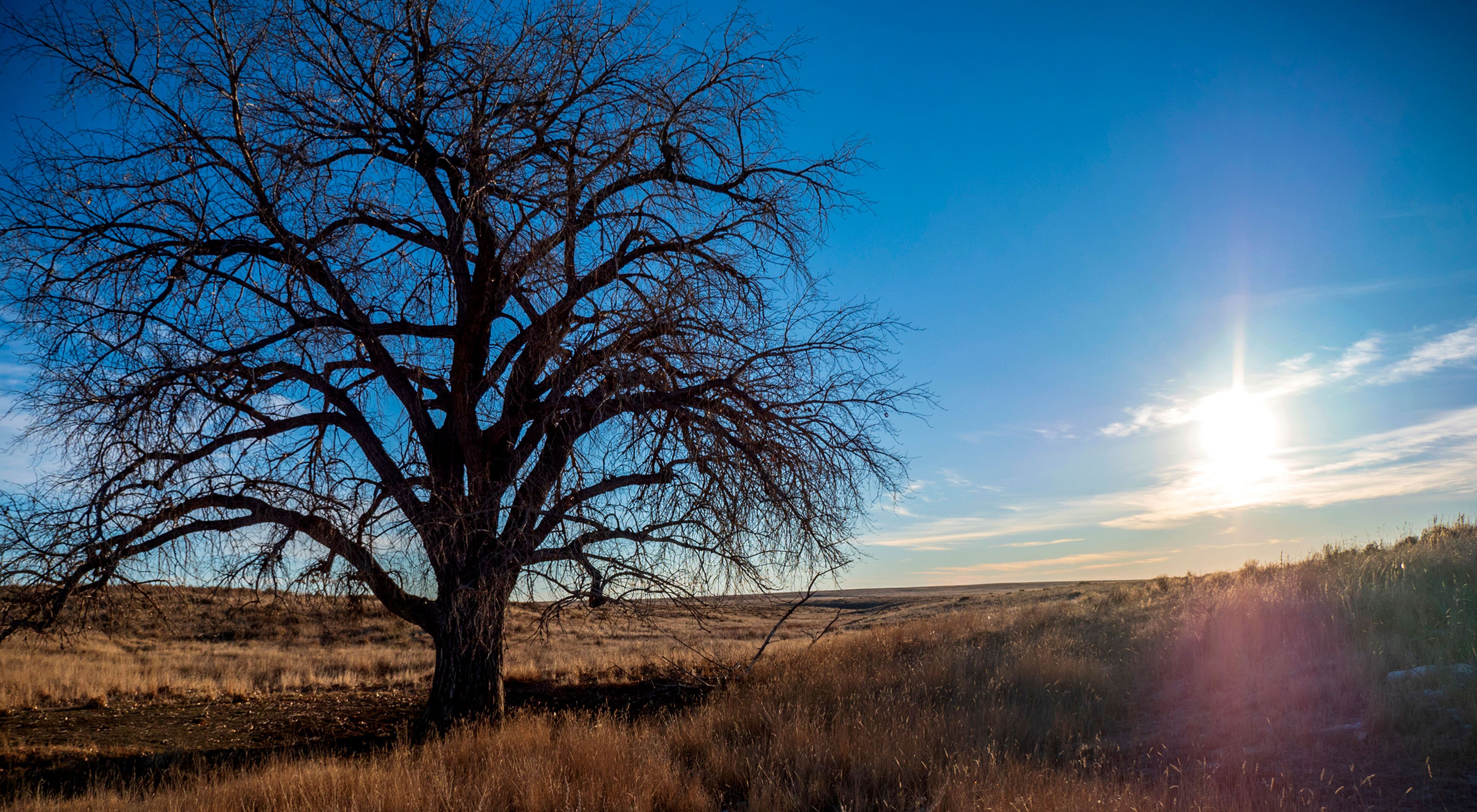 The sun rises over a prairie with a large tree in it.