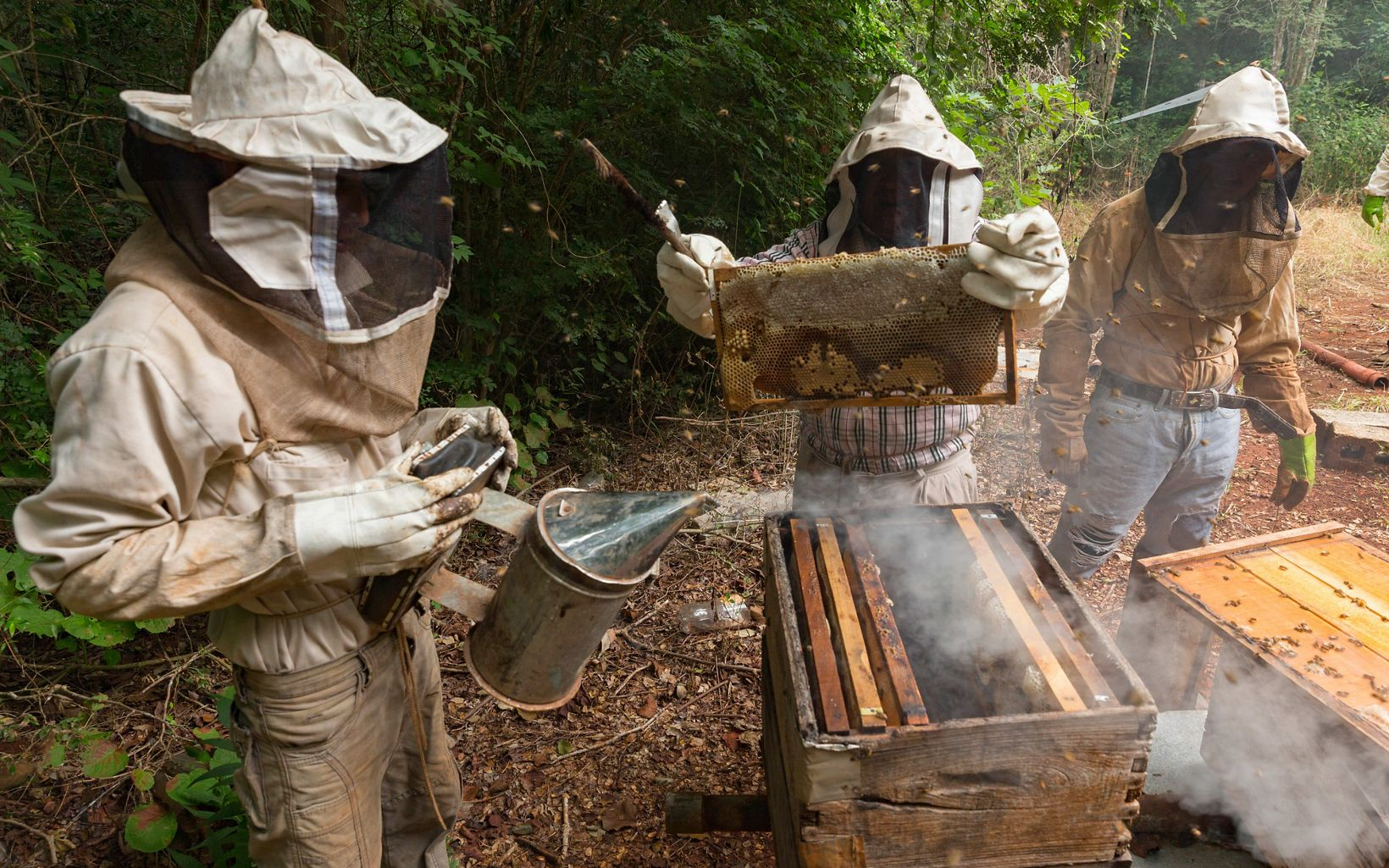 Matu Canche working his beekeeping boxes