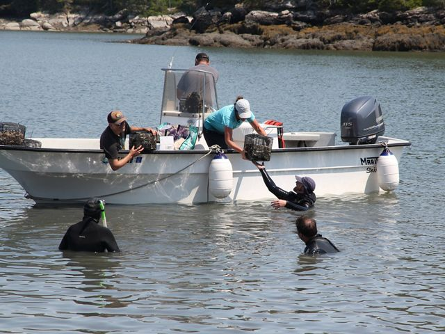 People in a boat hand shellfish crates down to people in wetsuits in the water.