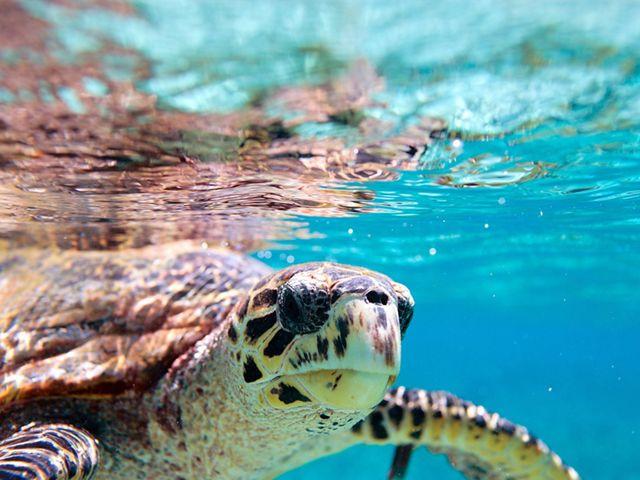 Sea turtle in Seychelles. © Hagai Zvulun