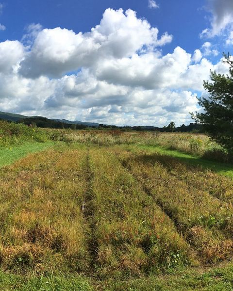The cranberry nursery at the Orchard Bog preserve in Tennessee's Shady Valley.