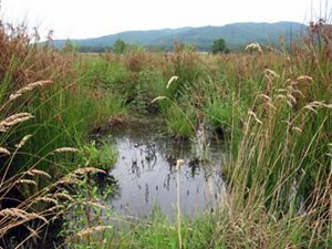 A pond emerges within a grassy field.