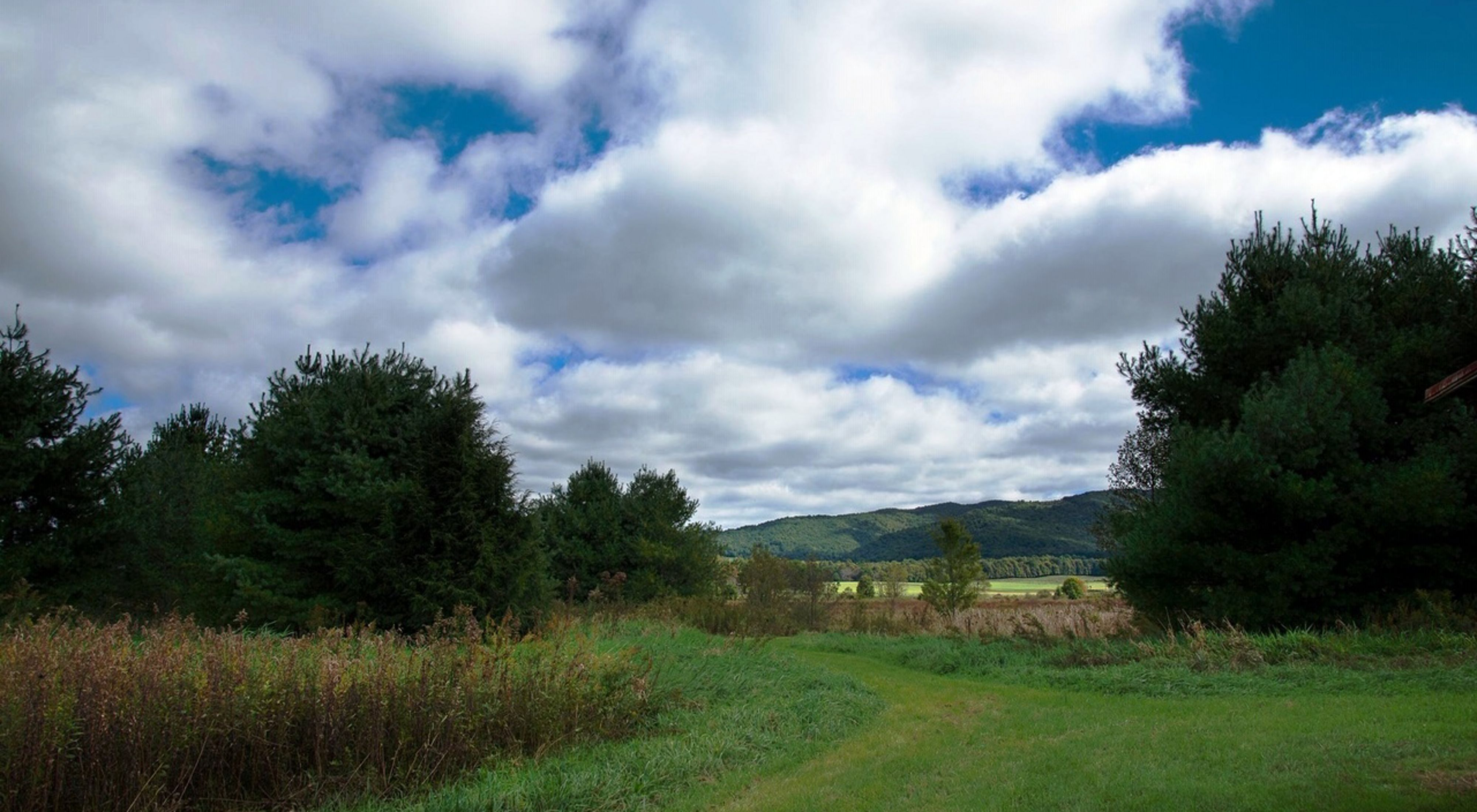A panoramic view of a valley boasting a forest and a field.