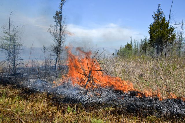 (ALL RIGHTS GRANTED TNC, CREDIT MANDATORY). Sharon Ruble Tract, Fay Lake, Prescribed Burn April 2017.  Photo Credit:  © Chris May/The Nature Conservancy