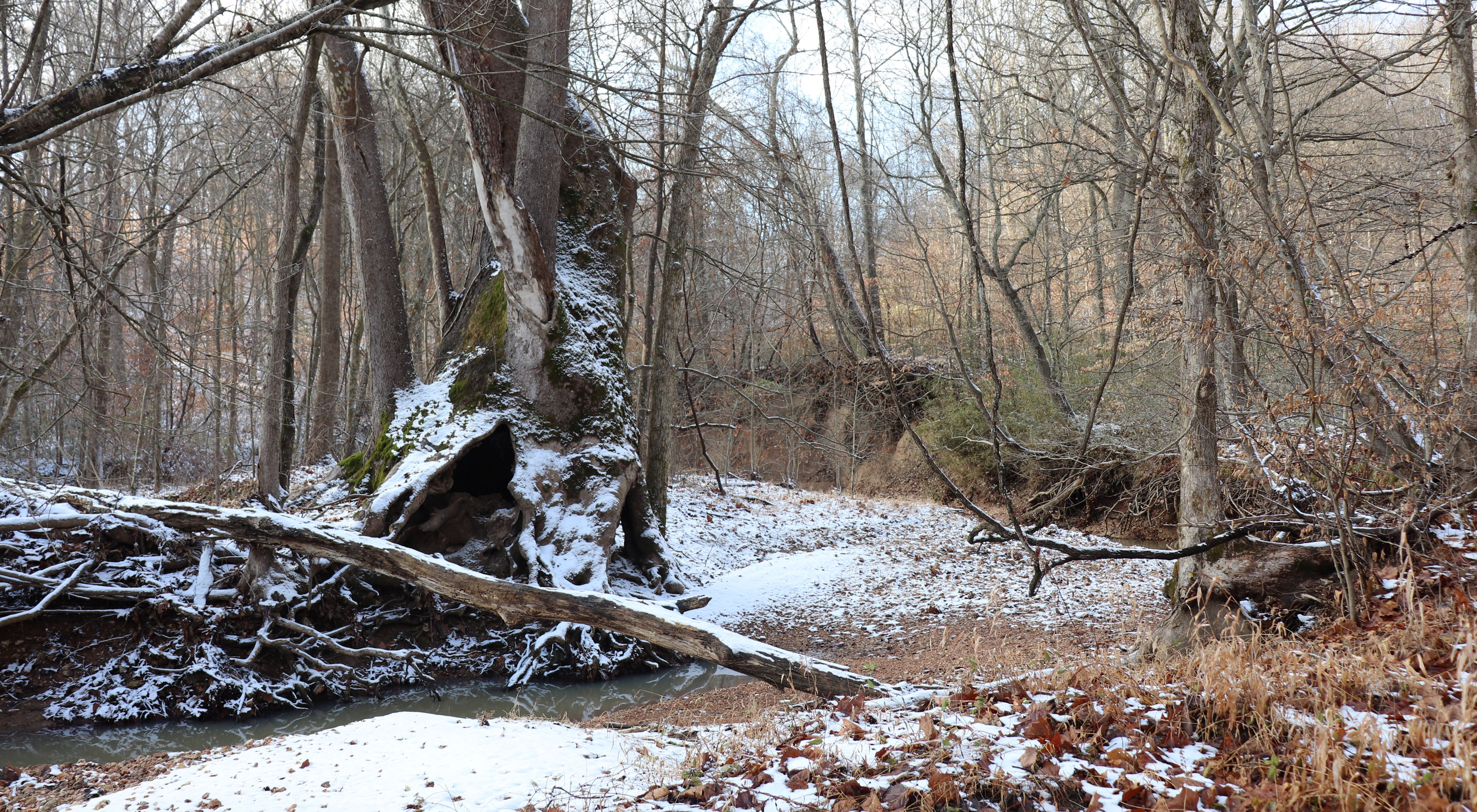 A creek runs through a forest covered by snow.