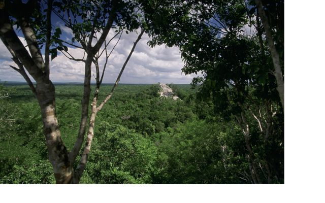 Dense, tropical lowland forest surrounds the ancient Maya site, Calakmul, located in the Calakmul Biosphere Reserve (Reserva de la Biosfera Calakmul), a 1.8 million acre conservation site just north of the Mexico-Guatemala Border in the state of Campeche. FULL USAGE RIGHTS