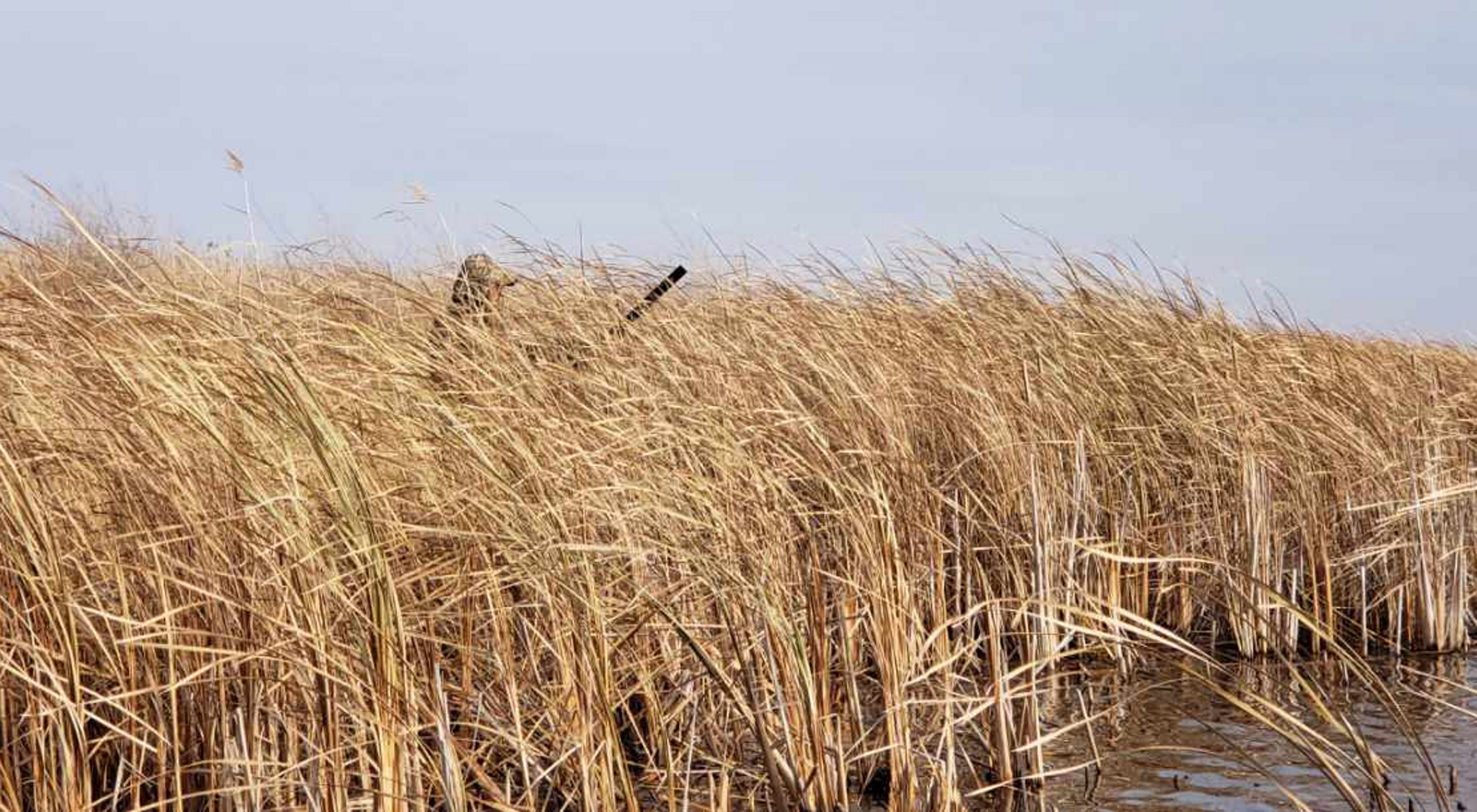 Hunter walking through tall grasses with a rifle in hand.