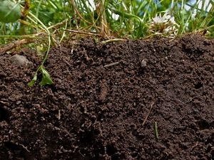 Soils host a quarter of our planet's biodiversity.
