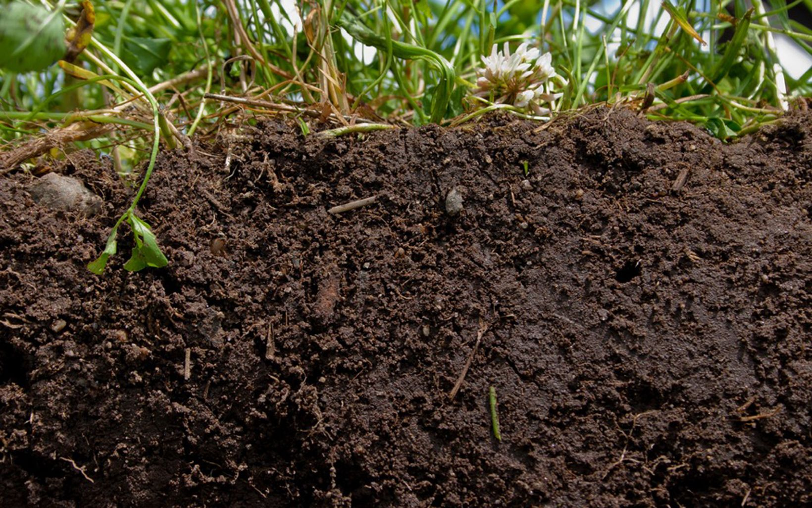 A cross-section of dark brown soil with plants growing at the top.