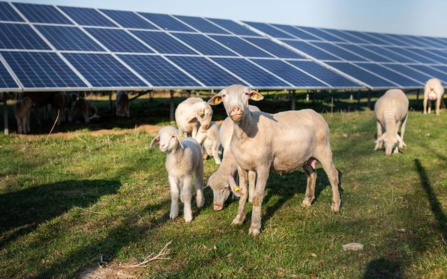 The solar arrays mapped in the Roadmap can be developed without negatively impacting many of the places Long Islanders hold dear, including farmlands and forests.
