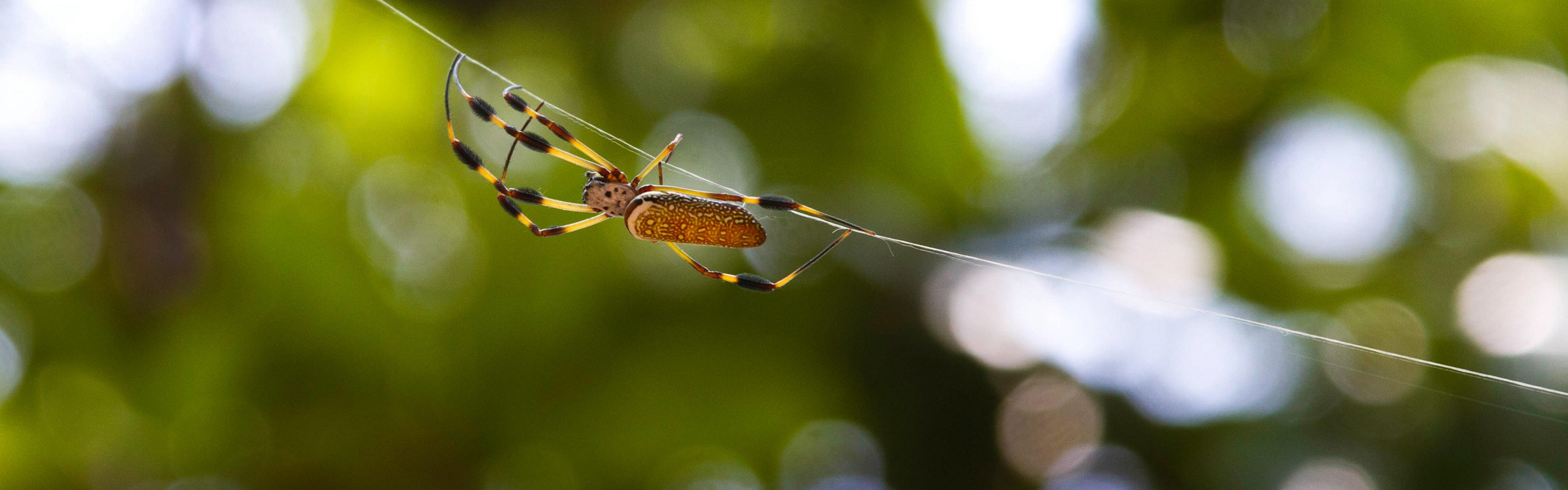 A spider crawls along its silky thread at this eastern Georgia preserve.