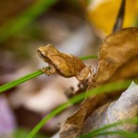 A small toad sits on a leaf.