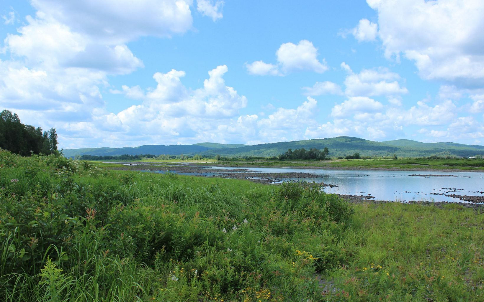 The St. John River with low water levels and green summer growth on the banks.