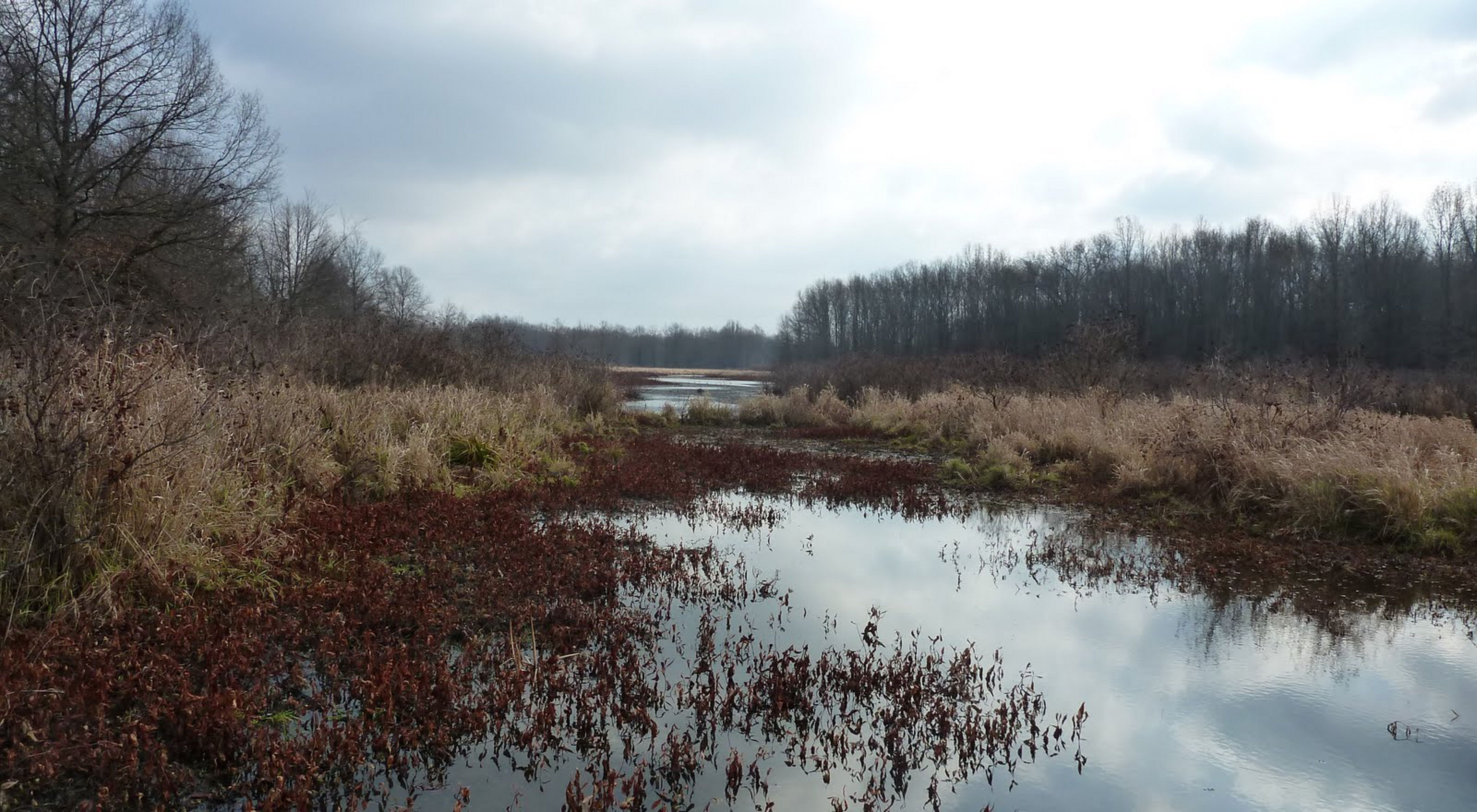A 600-acre wetland in eastern Ohio.