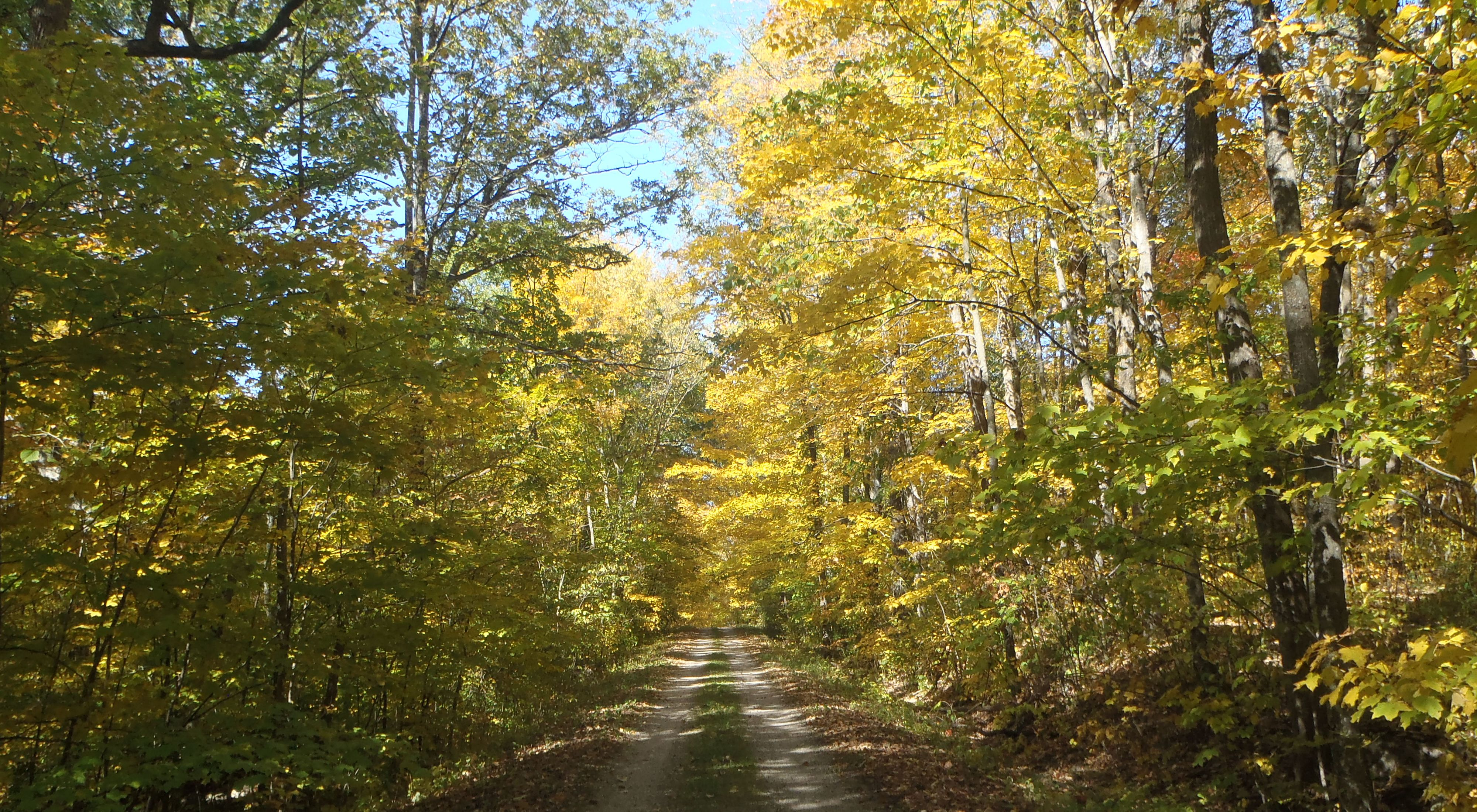 Unpaved road winds through a forest ablaze with fall color in Wisconsin.